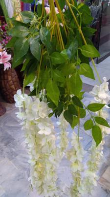 wisteria for shop and married lawns Pakistan Sadaqat 2