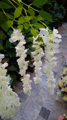 wisteria for shop and married lawns Pakistan Sadaqat 4
