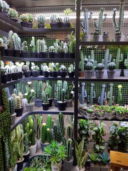 9165 YuanXinXin Flowers Showroom 006