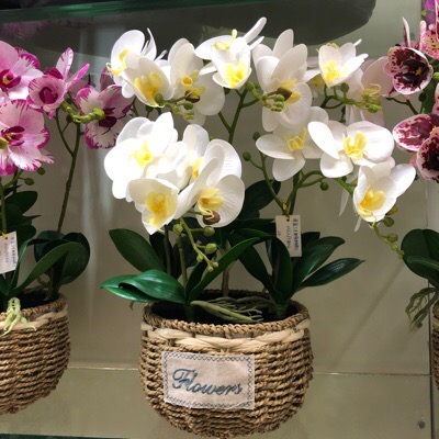 orchid-and-flowers-wholesale-yiwu-market-china-3