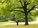 Yiwu City Tree